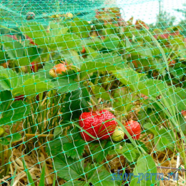 Сетка для защиты урожая от птиц У-6, 6х6, хаки